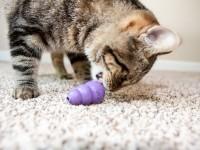 cat'stoys