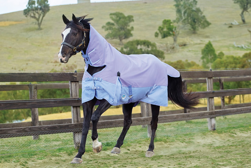 rug-your-horse